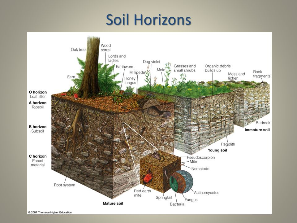 Can Natural Soil Recycle Inorganic Materials