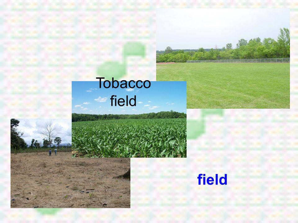 Tobacco field field