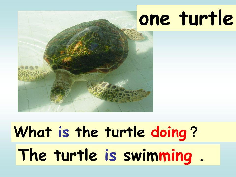 one turtle What is the turtle doing? The turtle is swimming .
