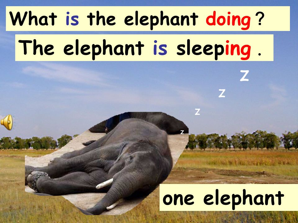 The elephant is sleeping . z