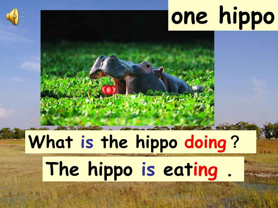one hippo What is the hippo doing? The hippo is eating .