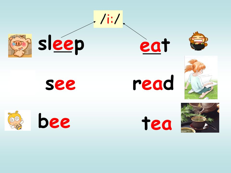 /i:/ sleep eat see read bee tea