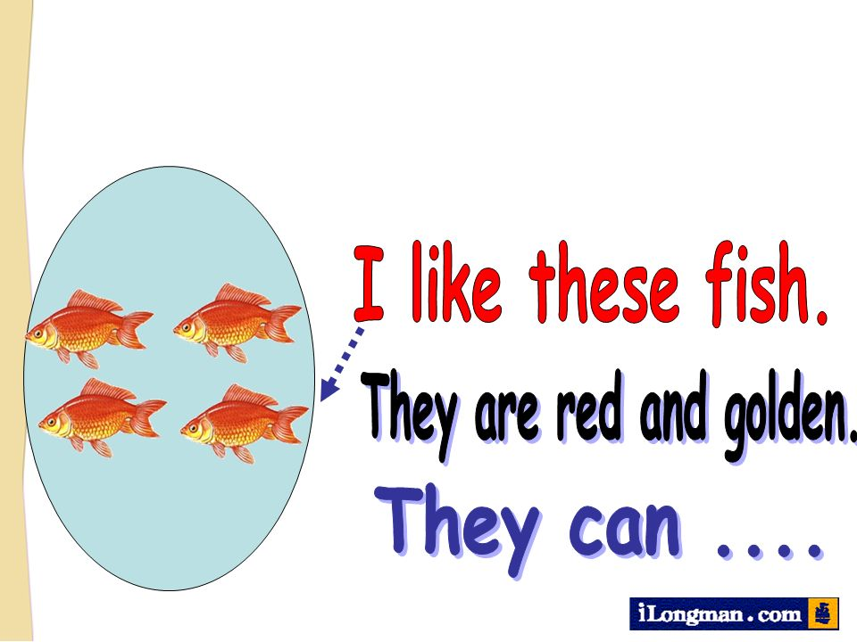 I like these fish. They are red and golden. They can ....