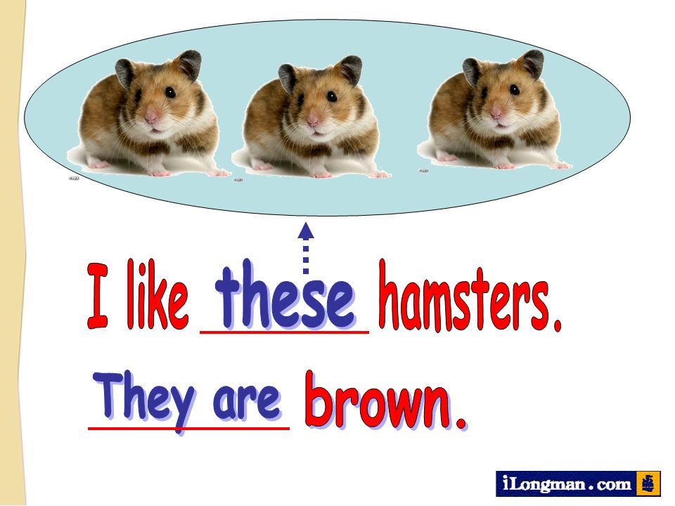 I like hamsters. these They are brown.