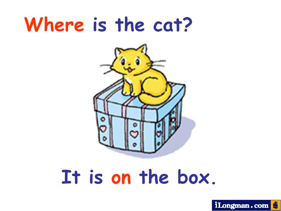 Where is the cat It is on the box.