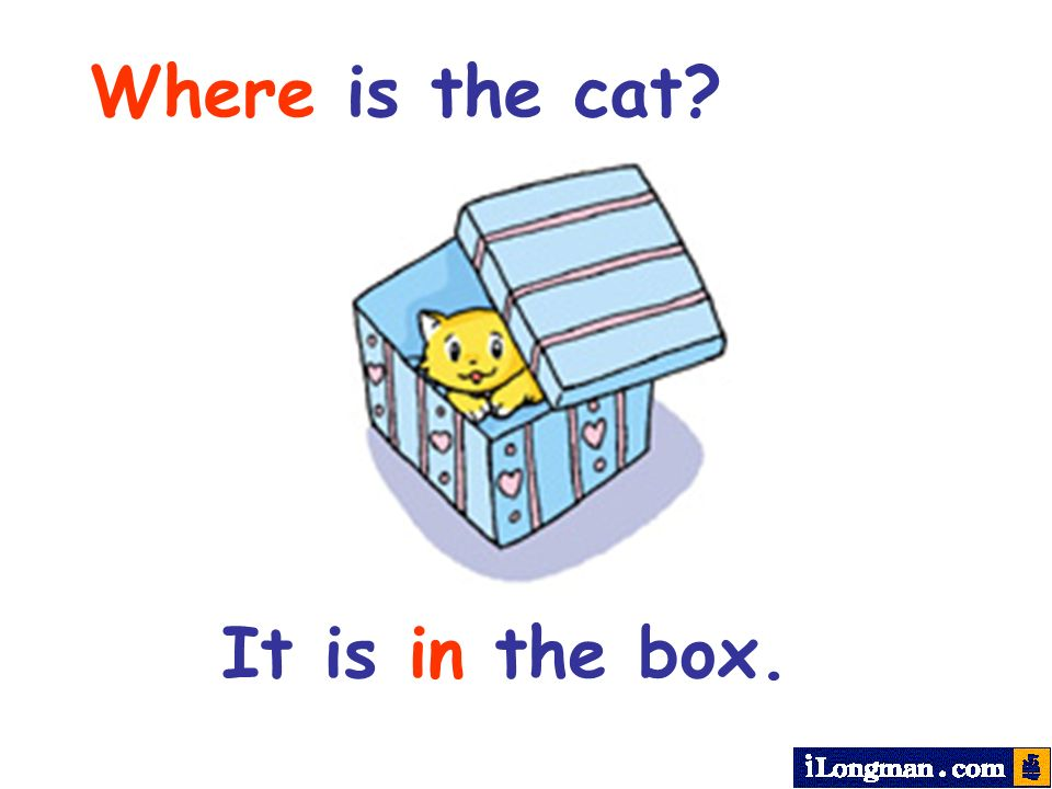 Where is the cat It is in the box.