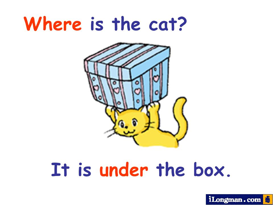 Where is the cat It is under the box.