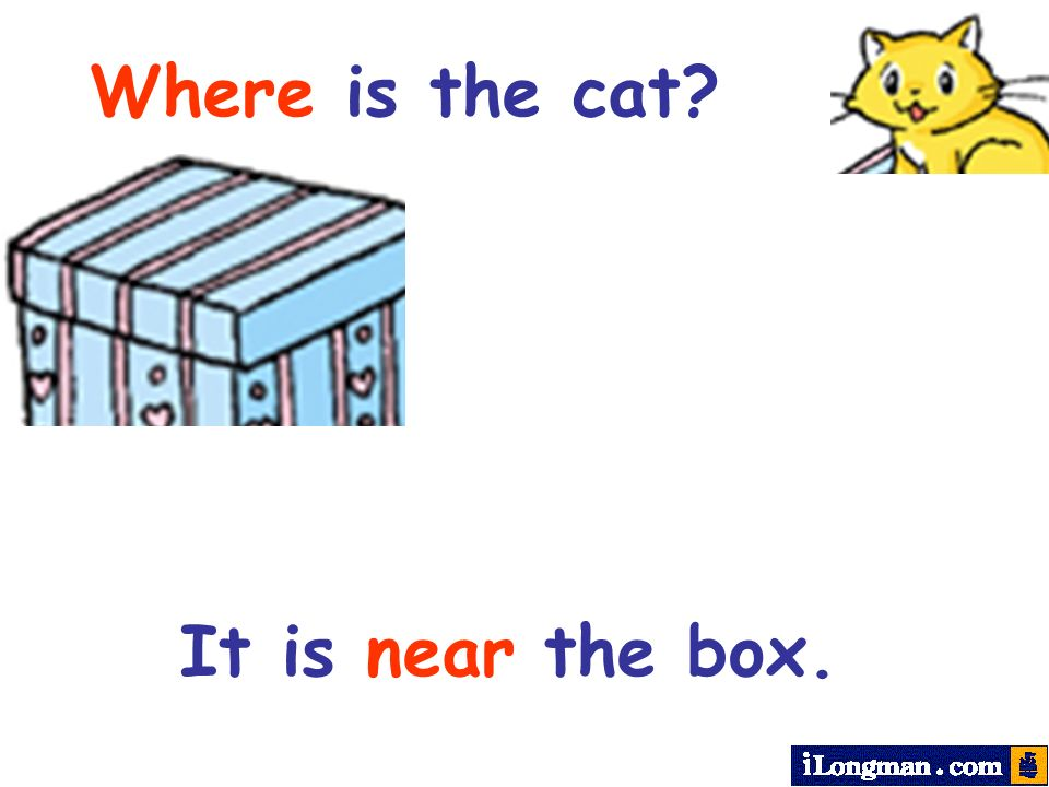 Where is the cat It is near the box.