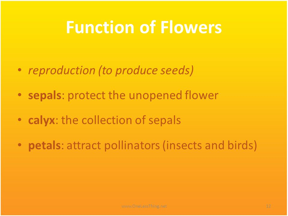 Function of Flowers reproduction (to produce seeds)