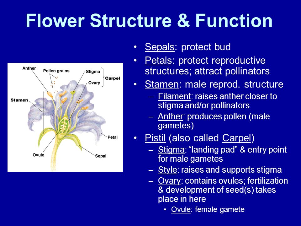 Flower Structure & Function