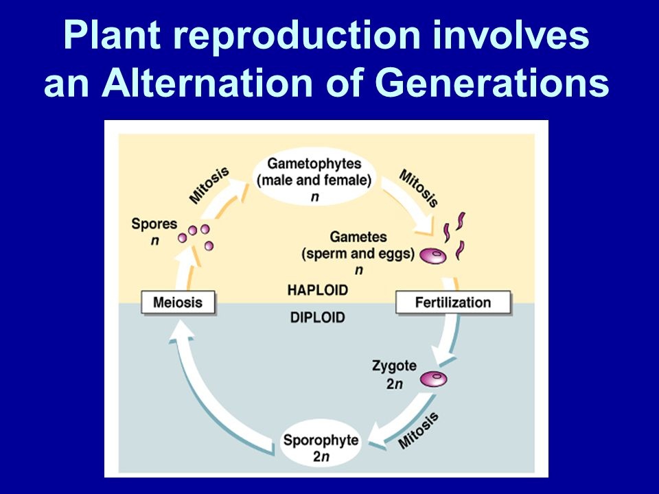 Plant reproduction involves an Alternation of Generations