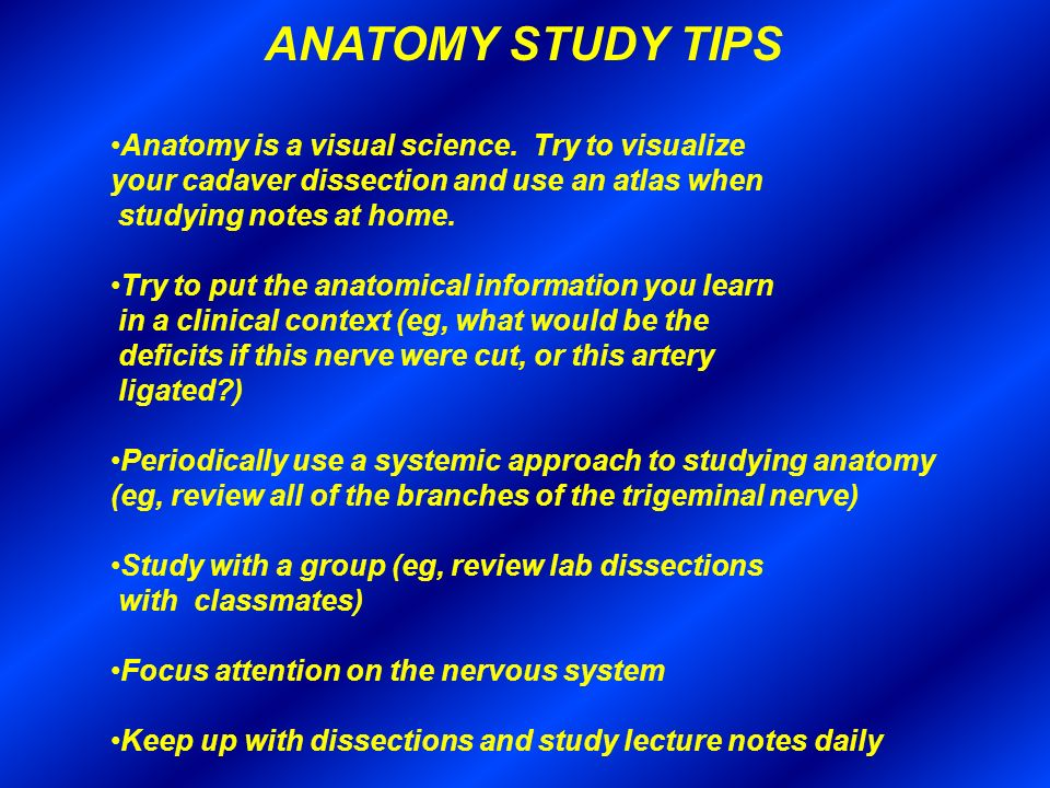 Gross Anatomy 2012 Introduction Dental Course Director Ppt Video