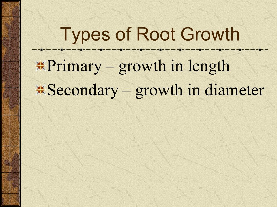 Types of Root Growth Primary – growth in length