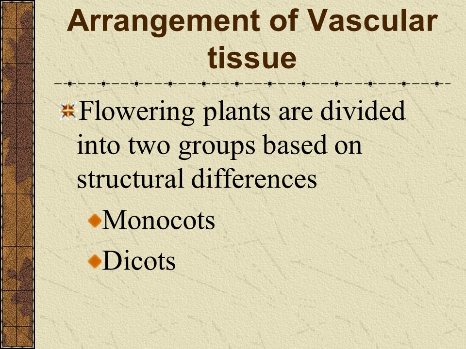 Arrangement of Vascular tissue