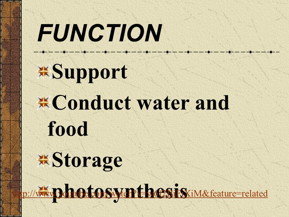 FUNCTION Support Conduct water and food Storage photosynthesis