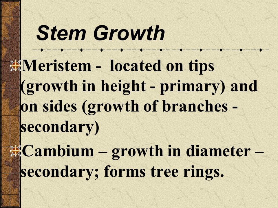 Stem Growth Meristem - located on tips (growth in height - primary) and on sides (growth of branches - secondary)
