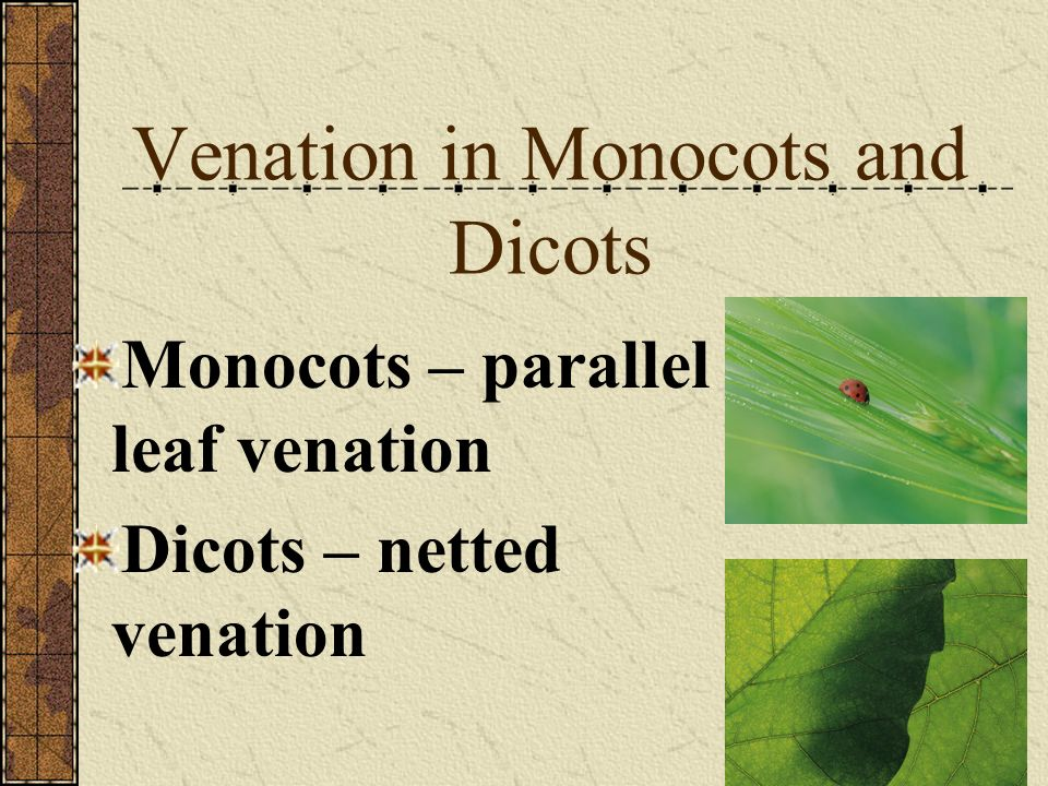 Venation in Monocots and Dicots