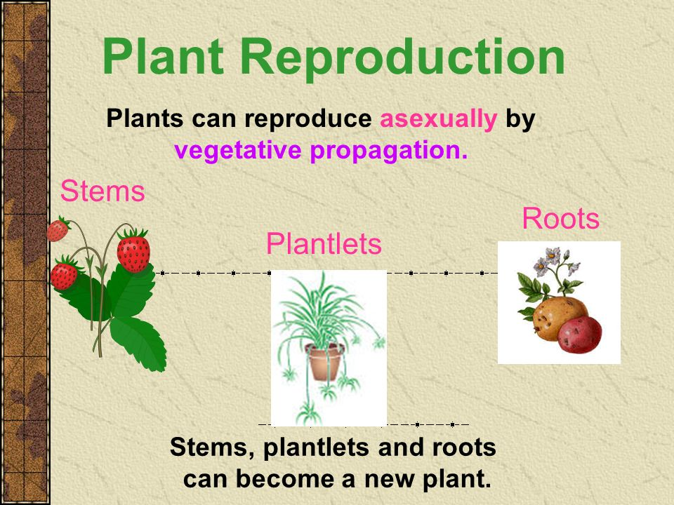 Plant Reproduction Stems Roots Plantlets