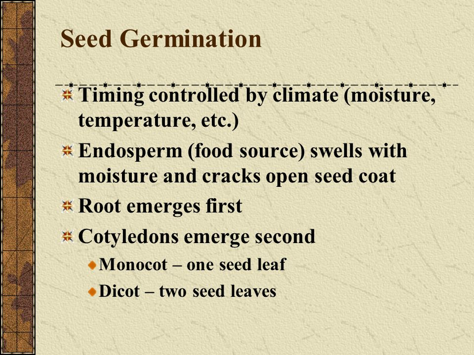 Seed Germination Timing controlled by climate (moisture, temperature, etc.) Endosperm (food source) swells with moisture and cracks open seed coat.