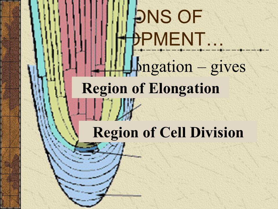 REGIONS OF DEVELOPMENT…