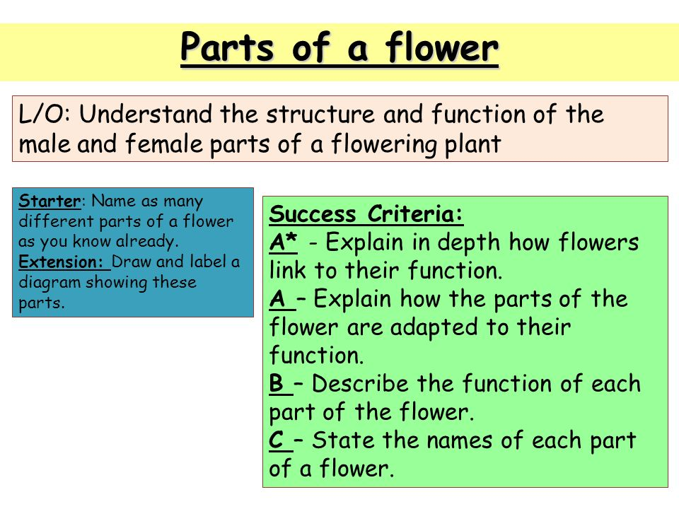Parts of a flower lo understand the structure and function of the 1 parts ccuart Images