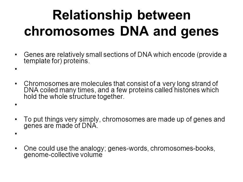 relationship between heredity genes and chromosomes