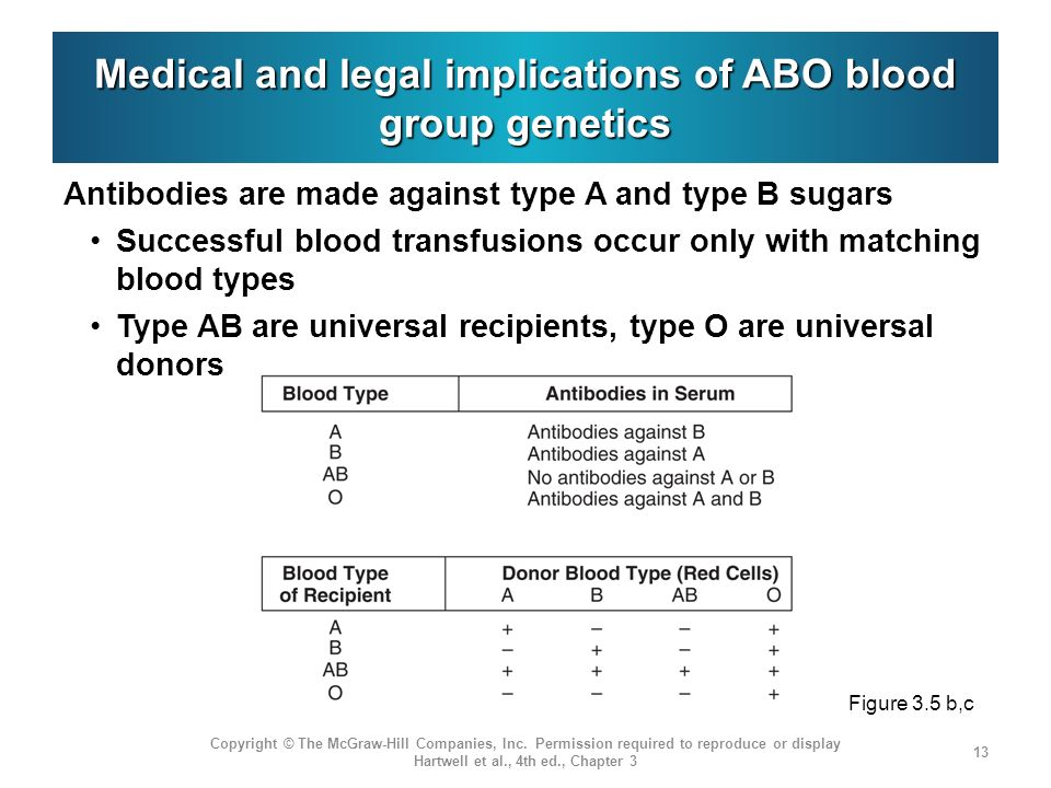 Abo blood group genetics Look