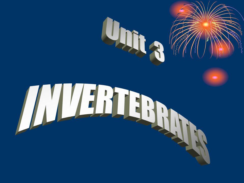 Unit 3 INVERTEBRATES