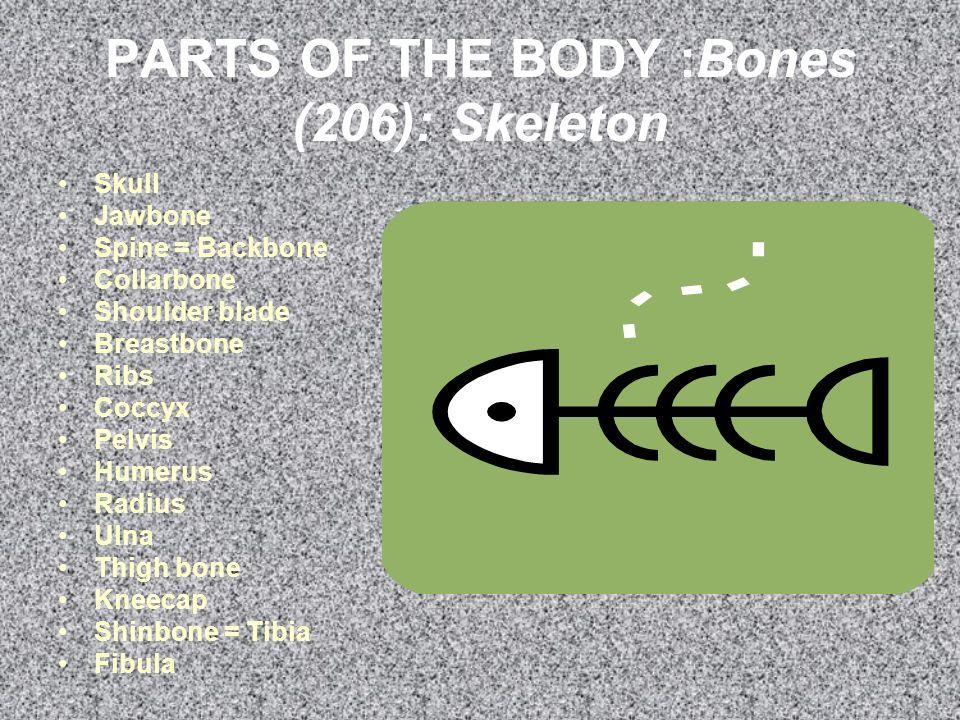 PARTS OF THE BODY :Bones (206): Skeleton