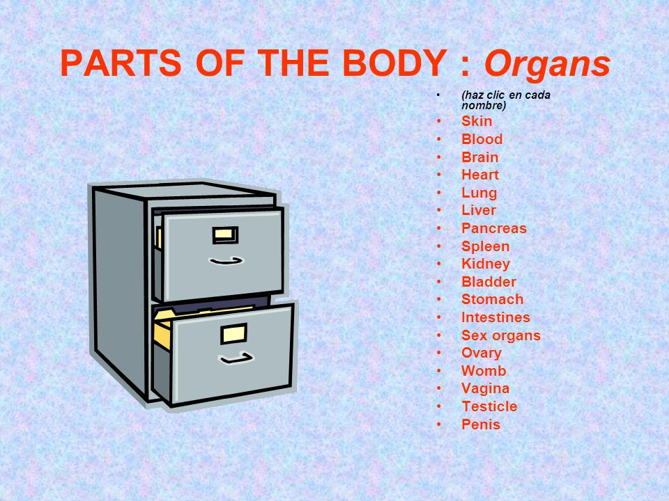 PARTS OF THE BODY : Organs