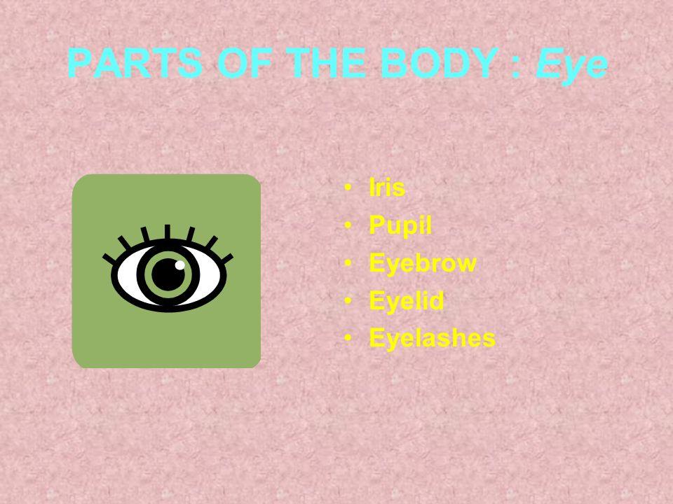 PARTS OF THE BODY : Eye Iris Pupil Eyebrow Eyelid Eyelashes