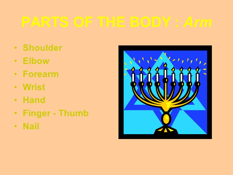 PARTS OF THE BODY : Arm Shoulder Elbow Forearm Wrist Hand