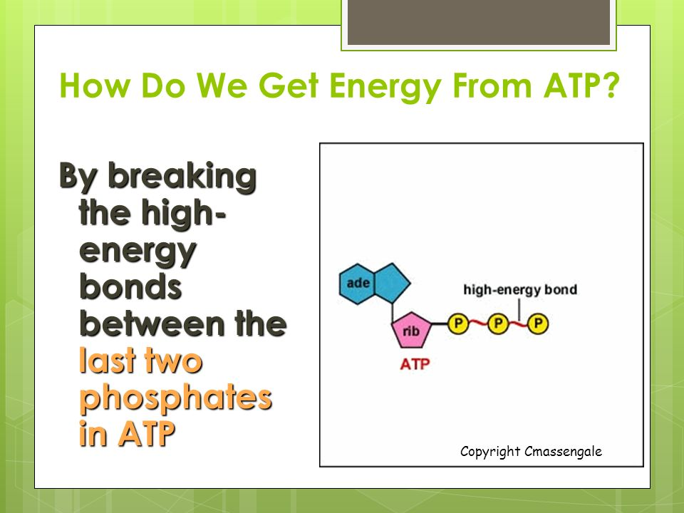 Cellular Respiration. - ppt download