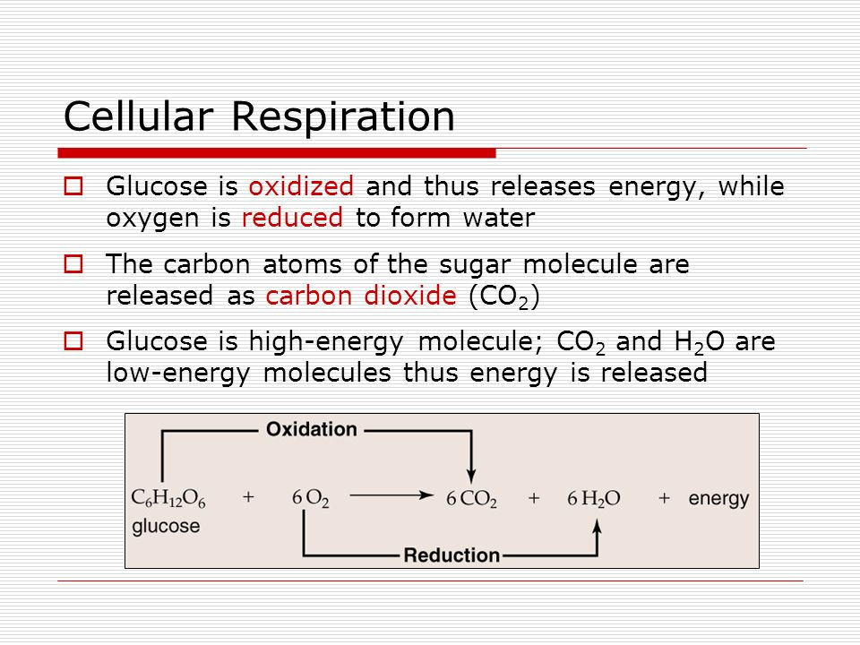 Chapter 8: Cellular Respiration (Outline) - ppt video online download
