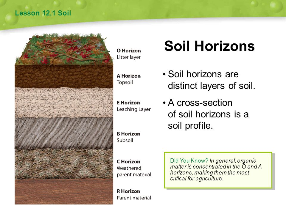 Soil and agriculture 12 chapter ppt video online download for Soil profile video