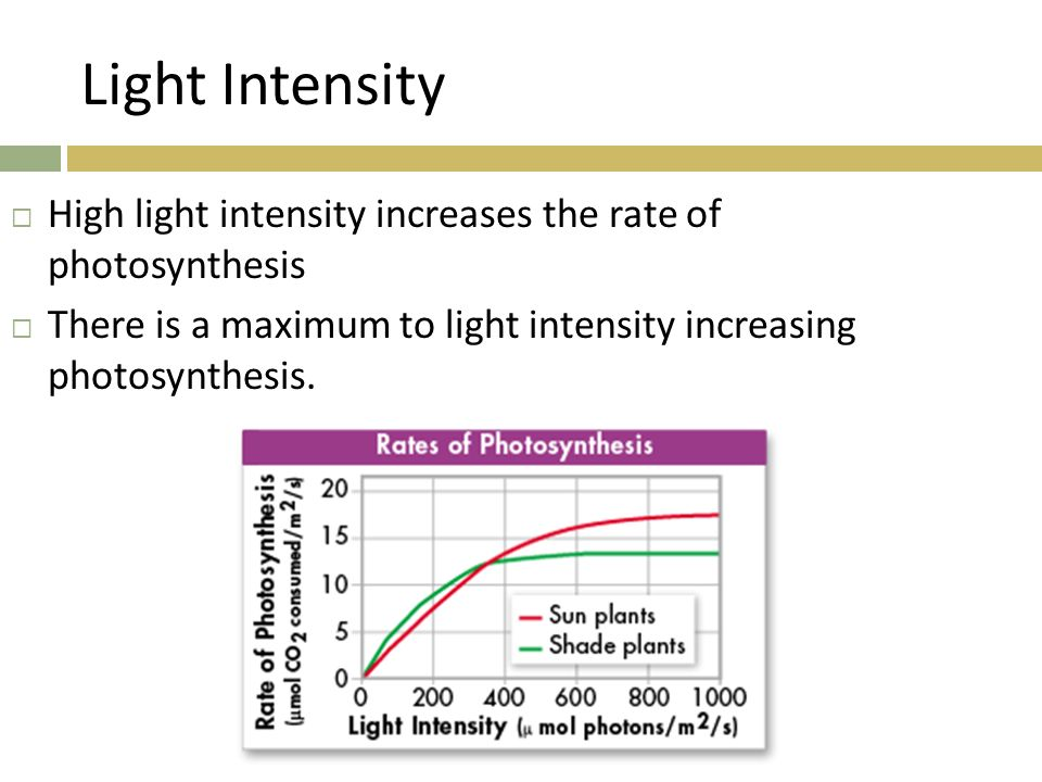 a essay of how light intensity affects the rate of photosynthesis The effect of light colour and intensity on the rate of photosynthesis  extraction this easy science project shows simple and efficient method of chlorophyll extraction from a plant - the effect of light colour and intensity on the rate of photosynthesis introduction.