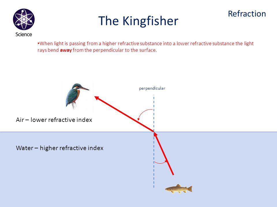 The Kingfisher Refraction Air – lower refractive index