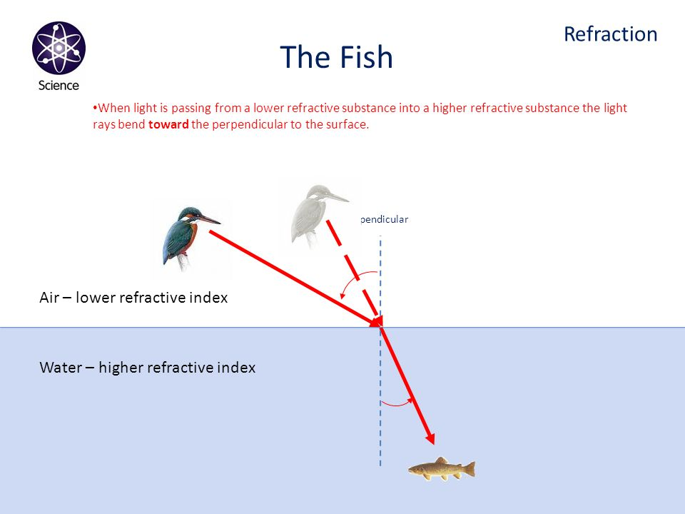 The Fish Refraction Air – lower refractive index