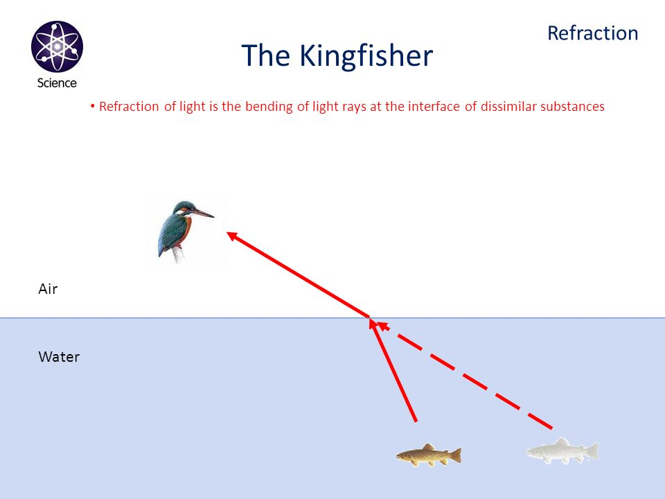 The Kingfisher Refraction Air Water
