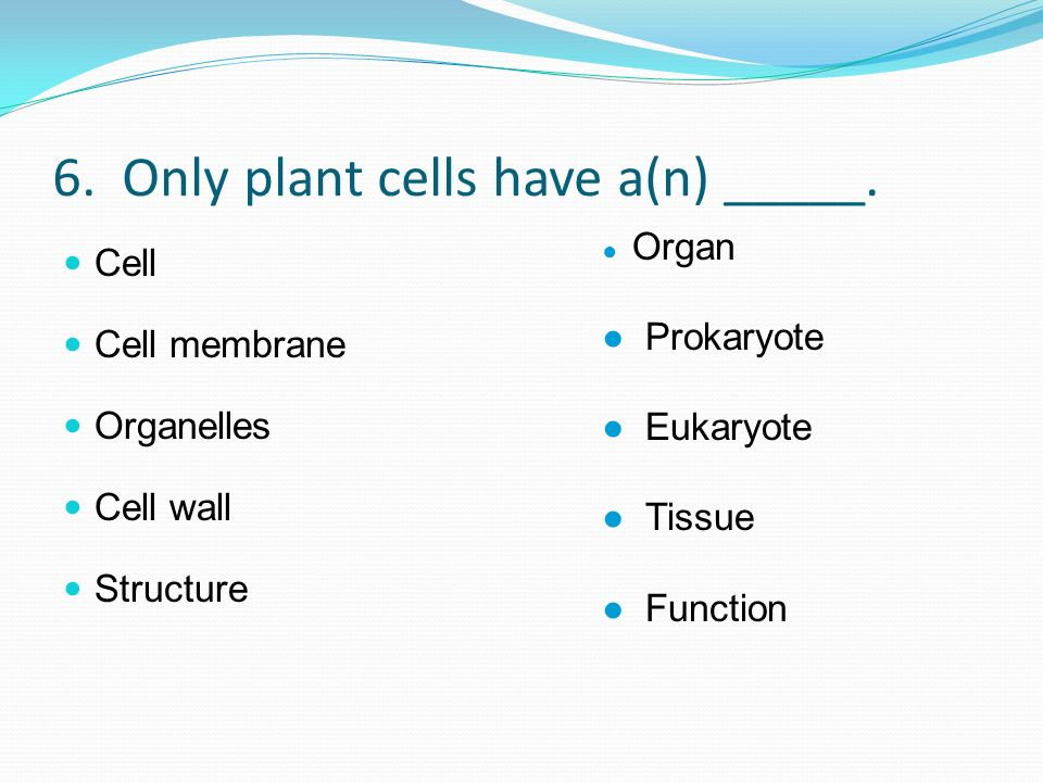 6. Only plant cells have a(n) _____.