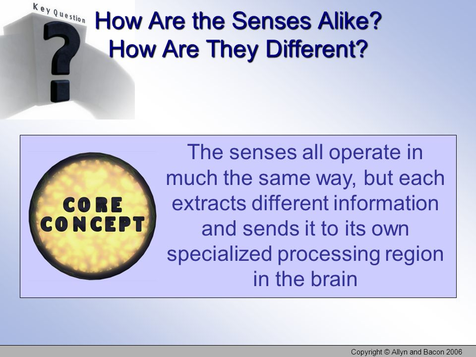 How Are the Senses Alike How Are They Different