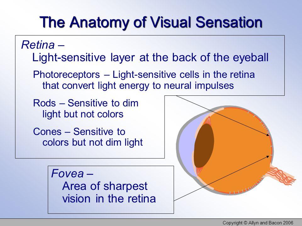 The Anatomy of Visual Sensation