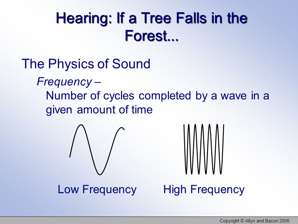Hearing: If a Tree Falls in the Forest...
