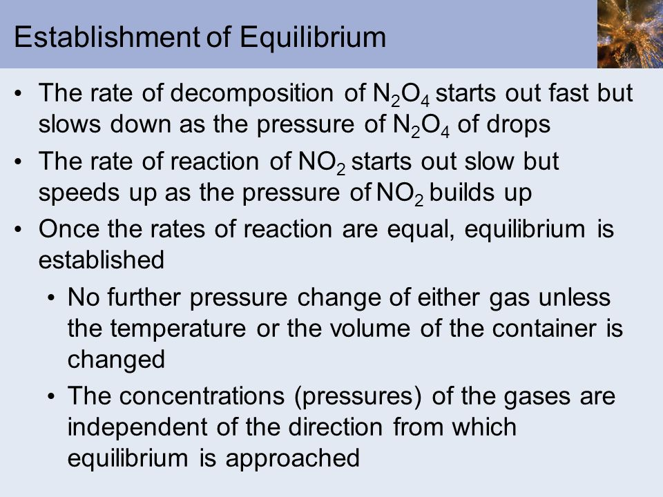 Establishment of Equilibrium