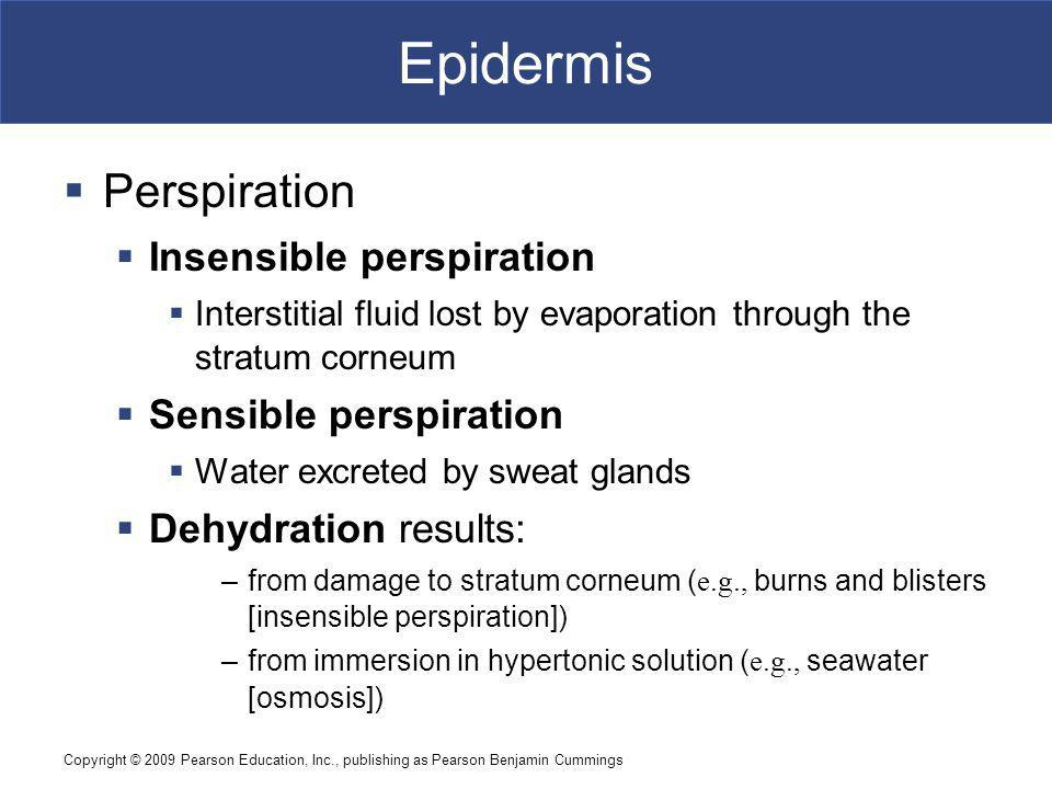 Epidermis Perspiration Insensible perspiration Sensible perspiration