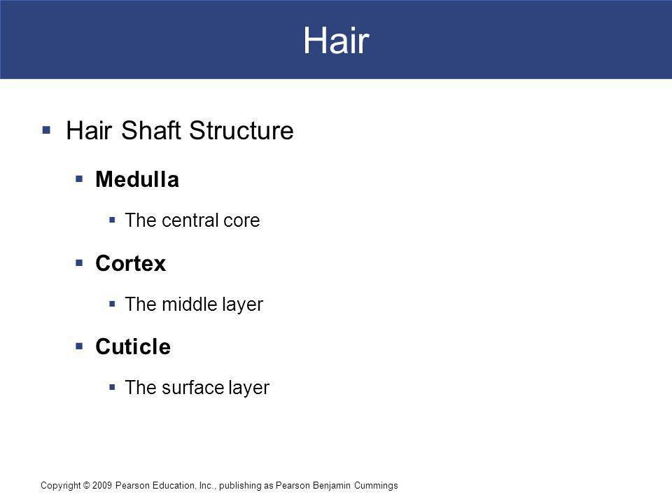 Hair Hair Shaft Structure Medulla Cortex Cuticle The central core