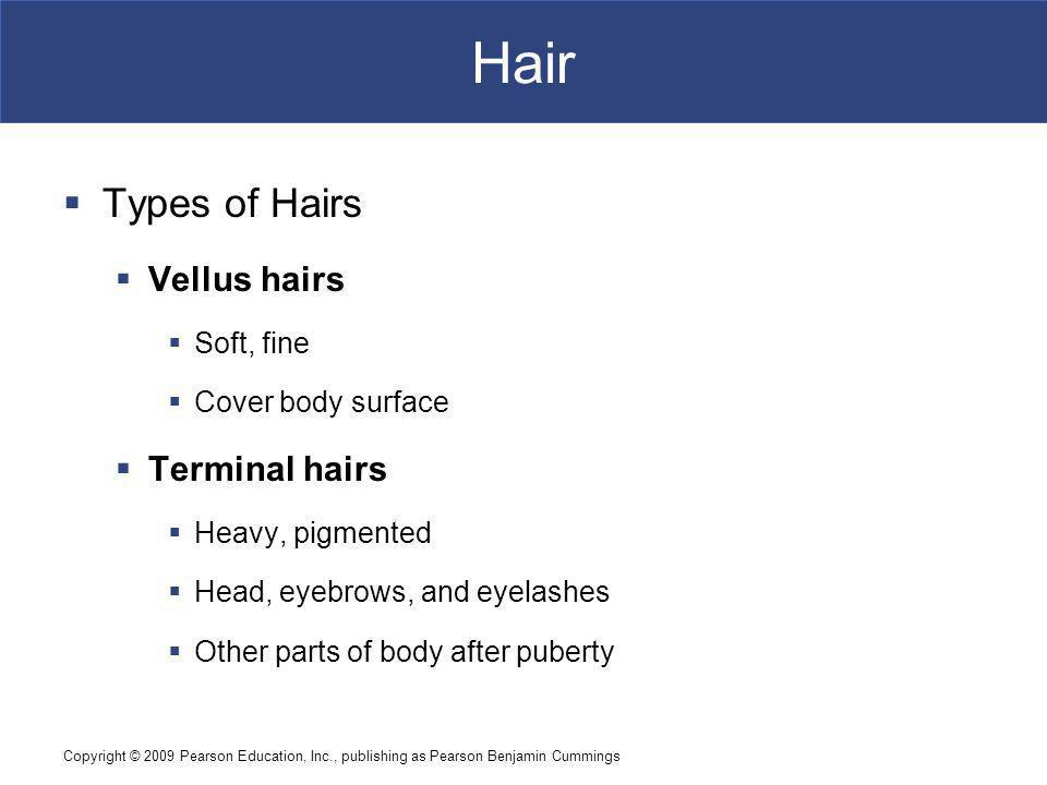 Hair Types of Hairs Vellus hairs Terminal hairs Soft, fine