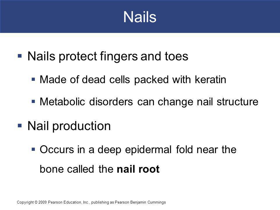 Nails Nails protect fingers and toes Nail production