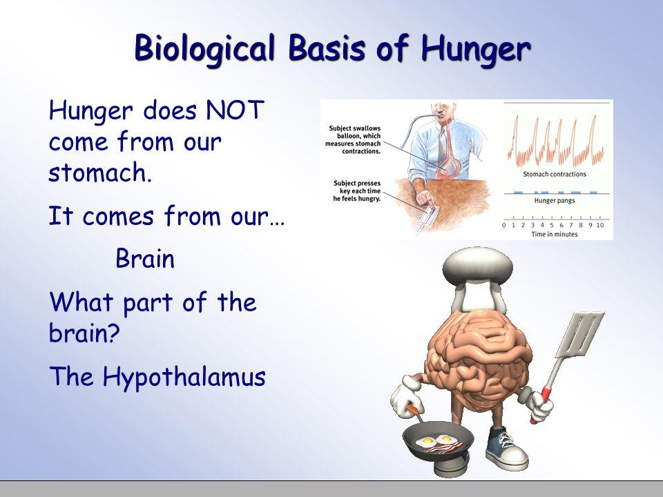 Biological Basis of Hunger