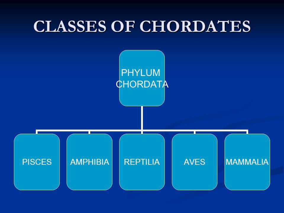 CLASSES OF CHORDATES